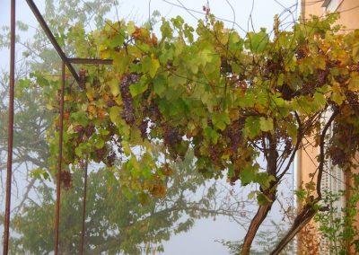 maison vigne brume