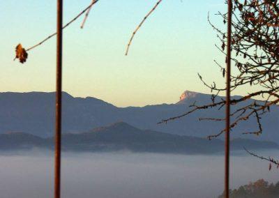 vue ouest brume vigne