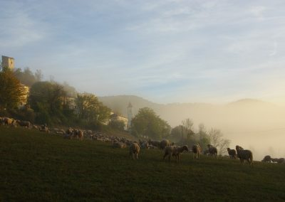 village moutons brume