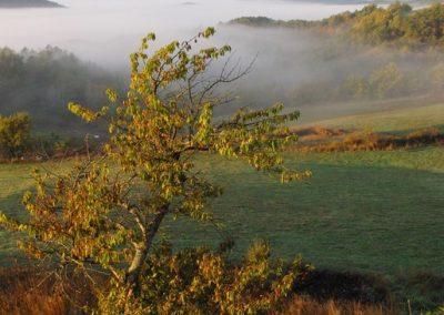 vue ouest brume cerisier bois haut